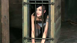 Chick in cage watches how master..